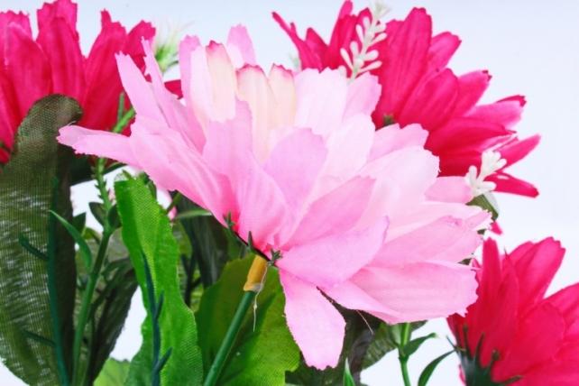 Хризантемы  розово-малиновые