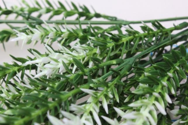 иглица бело/зеленая ветка 30см 6637 - искусственные растения
