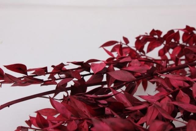 иглица иглица сухоцветы - бордовый 7696