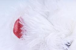 Игрушка мягкая (Г) - Мишка с Сердцем-33 белый 30см арт.2013-30