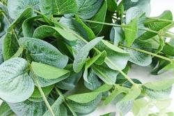 Искусственное растение - Букет эвкалипта  LIU390
