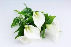 Искусственное растение - Каллы  белые