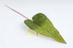 Искусственное растение - Лист Антуриума зелёный  DY1-2237