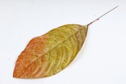 Искусственное растение - Лист Кротона оливково-оранжевый  DY1-2235