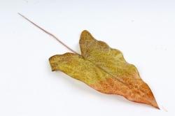 Искусственное растение - Лист тропический  оливково-оранжевый DY1-2233
