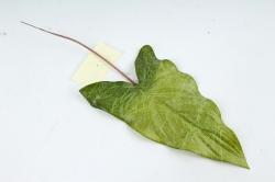Искусственное растение - Лист тропический зелёный DY1-2233