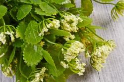 Искусственное растение - Листики декоративные кремовые