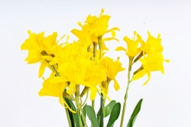 Искусственное растение - Нарциссы жёлтые