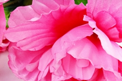 Искусственное растение - Пионы розовые
