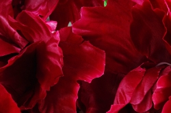 Искусственное растение - Пионы винные