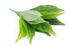 Искусственное растение - Сансивиерия 11 листов  см Б10843