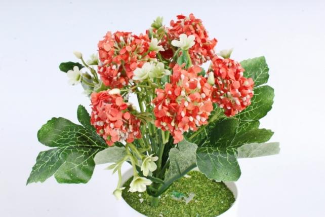 Искусственное растение -  Астранция оранжевая