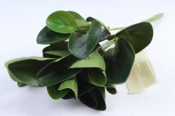 Искусственное растение -  Букет толстянки зелёный Б10006