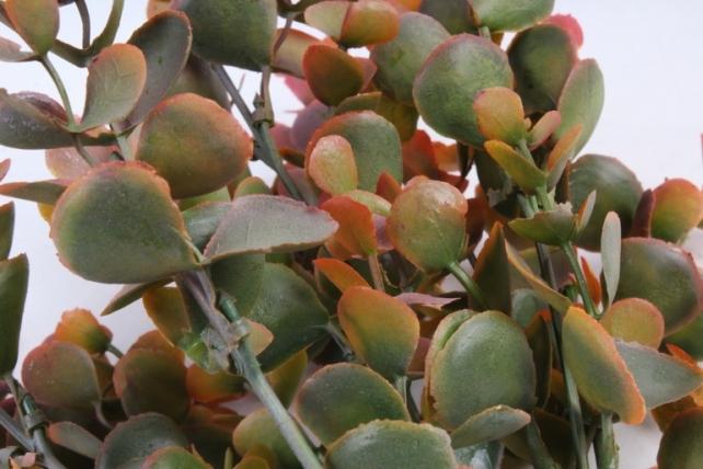 Искусственное растение -  Эвкалипт Цинерея брусничный Б9887