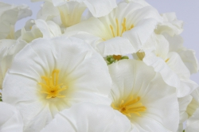 искусственное растение - герань белая h=30cm