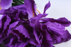 Искусственное растение -  Ирис Лорион фиолетовый  Б9144