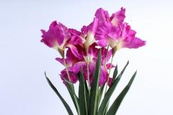 Искусственное растение -  Ирис Лорион фуксия  Б9144