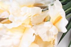 Искусственное растение -  Ирис Лорион кремовый  Б9144