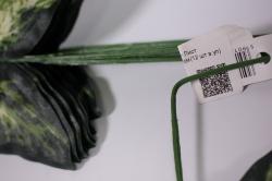 искусственноерастение-листдекоративныйсветлый25см(12штвуп)2833