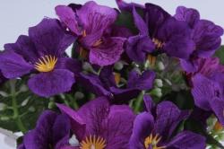 искусственное растение - примула фиолетовая h=28cm