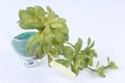 Искусственное растение -  Суккулент Эониум благородный зелёный  Э10314