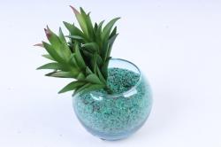 Искусственное растение -  Суккулент Гастерия зелёный  Э10318
