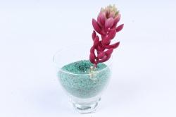 Искусственное растение -  Суккулент Очиток Моргана бордо Э10317