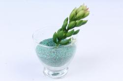 Искусственное растение -  Суккулент Очиток Моргана зелёный  Э10317