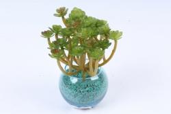 Искусственное растение -  Суккулент Оскулярия  Э10308