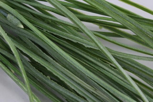 искусственное растение- трава  с побегом бело-зеленая 40см (2шт в уп) ava203-1  2723