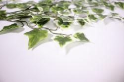 искусственноерастение-веткаплющабело-зелёная55см3262