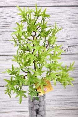 Искусственное растение -  Веточка клёна карликового38 см*20 см зелёная  21KW075