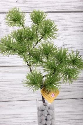 Искусственное растение -  Веточка сосны горной оливковая  38 см* 20 см  21KW081