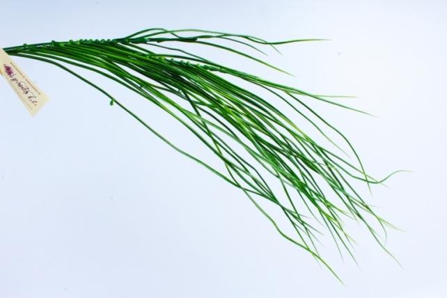 Искусственное растение -  Веточка зелёная  GAP156