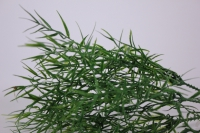 искусственные растения - 3427 зелень аспарагуса 21см (5шт в уп)
