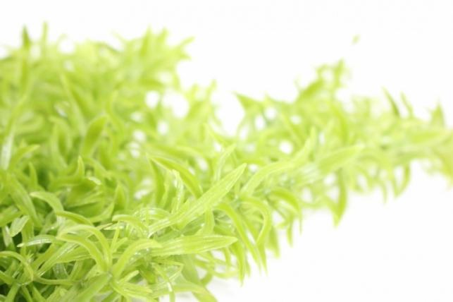 искусственные растения - 4995 ветки зеленые 25 см (25 шт в уп)