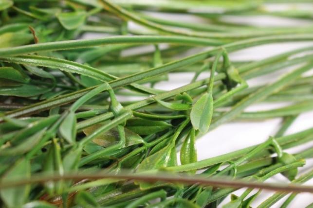 искусственные растения - 9705 гипсофила оранжевая  40см (10шт в уп)