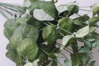 искусственные растения - жимолость  р2012006
