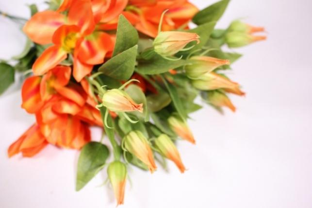 искусственные растения - клематис оранжевый 45см(12шт в уп) sun444