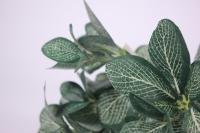 искусственные растения - листья фиттонии