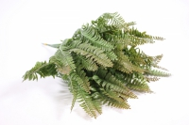 искусственные растения - папортник 30см (10шт в уп) gay84 (код 2546)