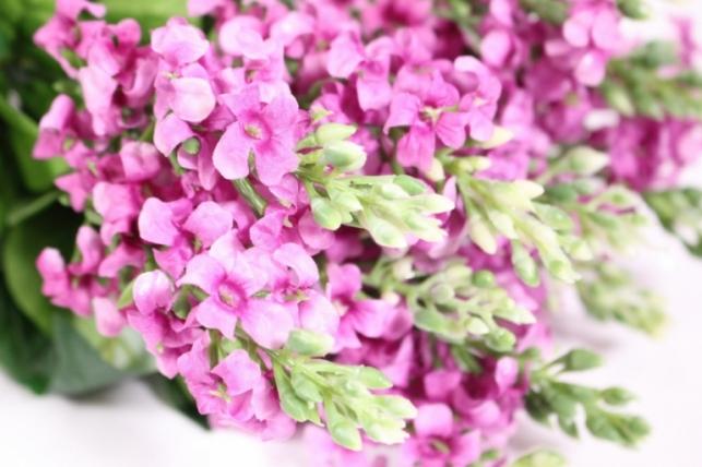 искусственные растения - сирень 45см малиновая (12шт в уп) liu201