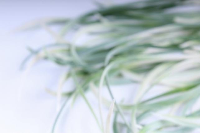 искусственные растения - трава декоративная бело-зеленая 50 см kwla283z - код 5220