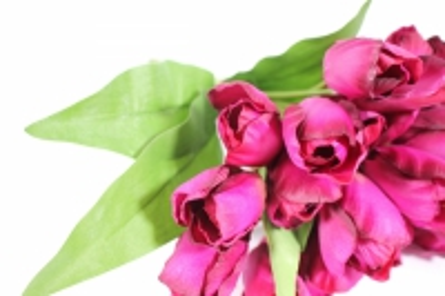 искусственные растения - тюльпан 35см малиновый  zliu203
