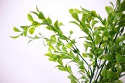 искусственные растения - веточкатравы30см5716