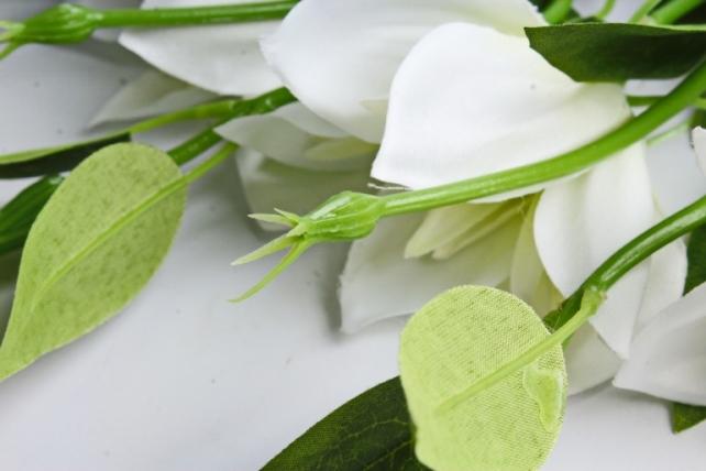Клематис бело-салатовый 45см(3 шт в уп) SUN500