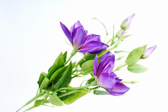 Клематис фиолетовый (3 шт в уп) SUN500