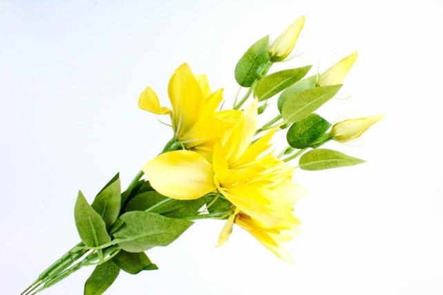 Клематис желтый (3шт в уп) SUN500