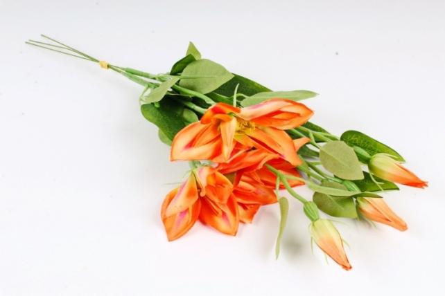 Клематис оранж (3 шт в уп) SUN500