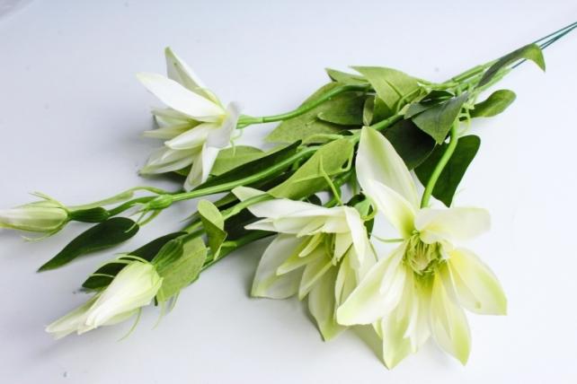 Клематис салатовый 45см(3 шт в уп) SUN500